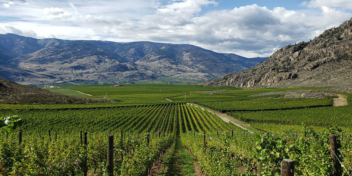 mission hills vineyard in Osoyoos